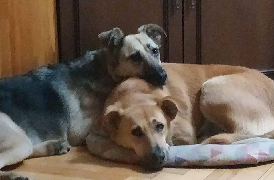 Сима и Боня